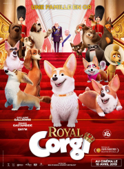 royal-corgi